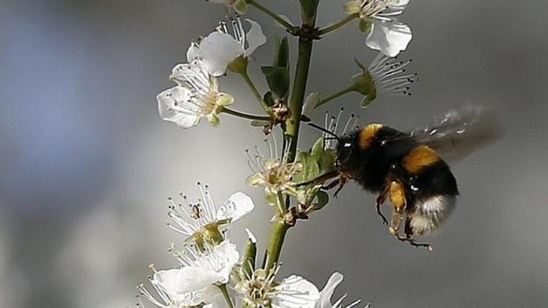 Las abejas de la miel están desapareciendo / ABC
