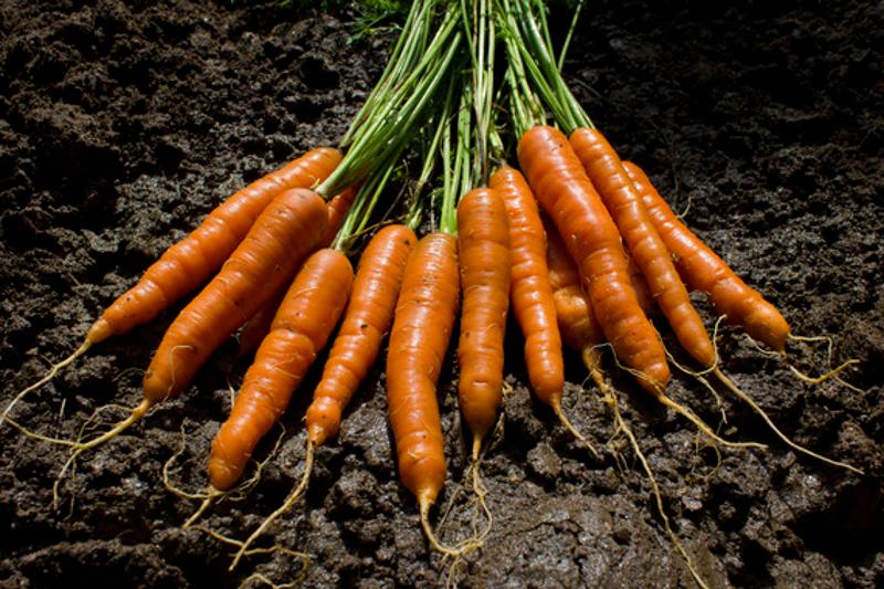 El-genoma-de-la-zanahoria-revela-el-secreto-de-su-color