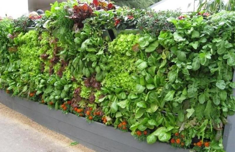 pared de hortalizas