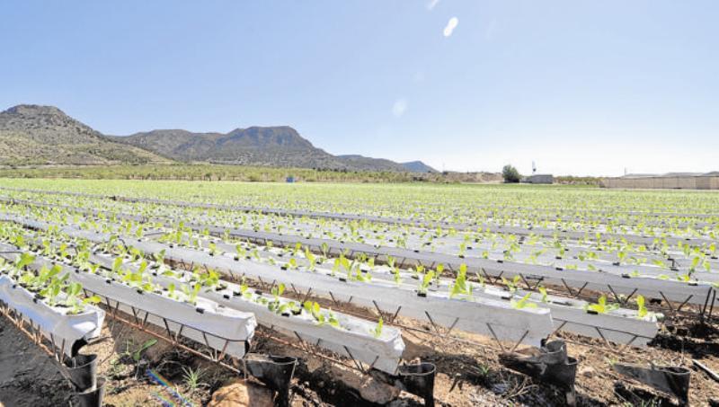 El cultivo hidropónico se hace sobre disoluciones minerales en vez de en suelo agrícola / ABC