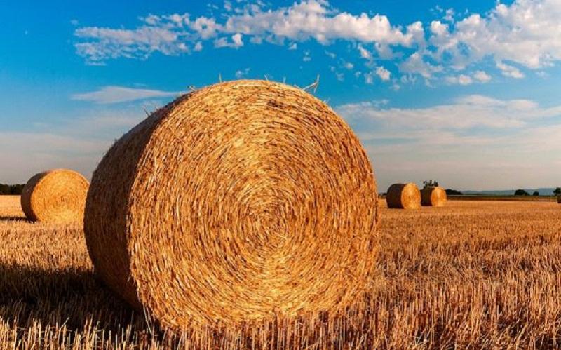 agricultura-cambio-climatico-600x391-2