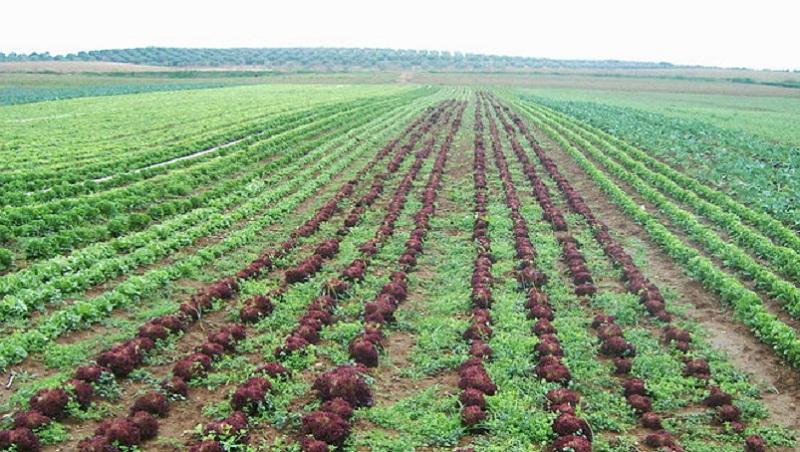 superficie-hortalizas-cultivados-ecologicos-incrementado_1085901460_62738076_667x375