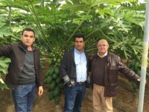 De izquierda a derecha: Asensio Navarro (Semilleros Vitalplant), Joaquín Segura (Agricultor) y Francisco Camacho (AGR-200).