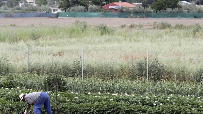 agricultor-plena-labor
