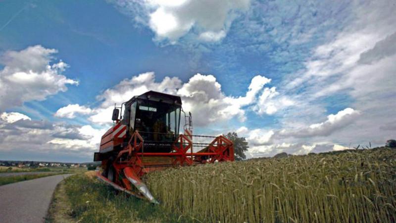 campo de trigo alemania
