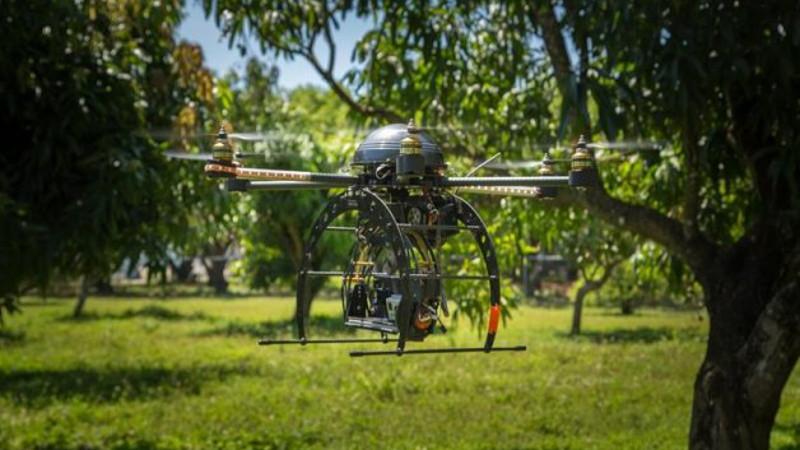 dron detectar aguacates con hongos