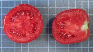 tomate-sabor