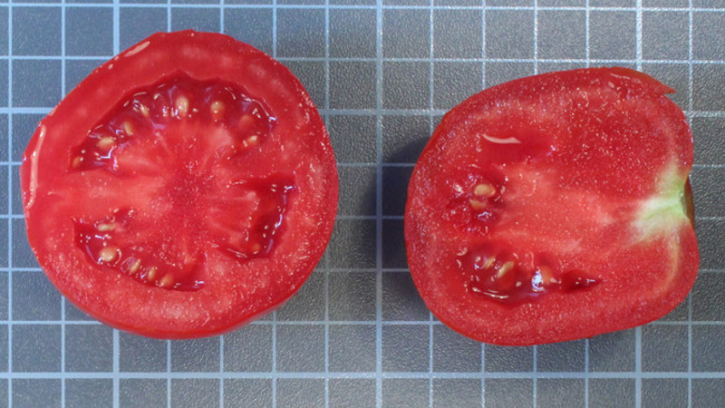 tomate-sabor