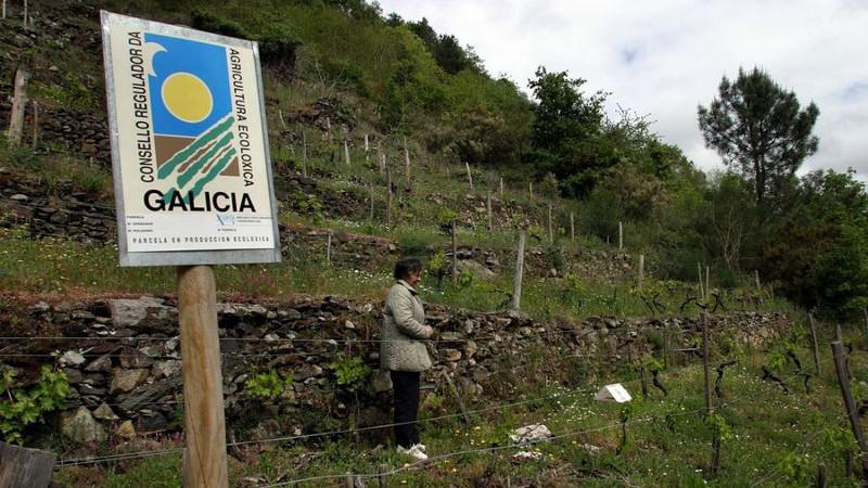 agricultura-ecologica-galicia