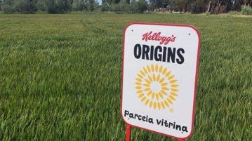 kellog-ebro-agricultura-sostenible-arroz