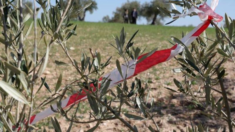 olivo-zona-afectada