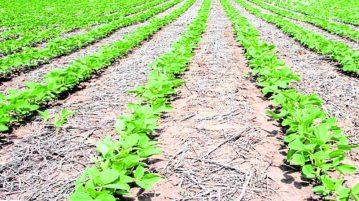 agricultura-conservacion