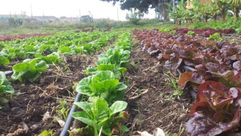 agricultura-ecologica