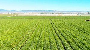 campo-agricola