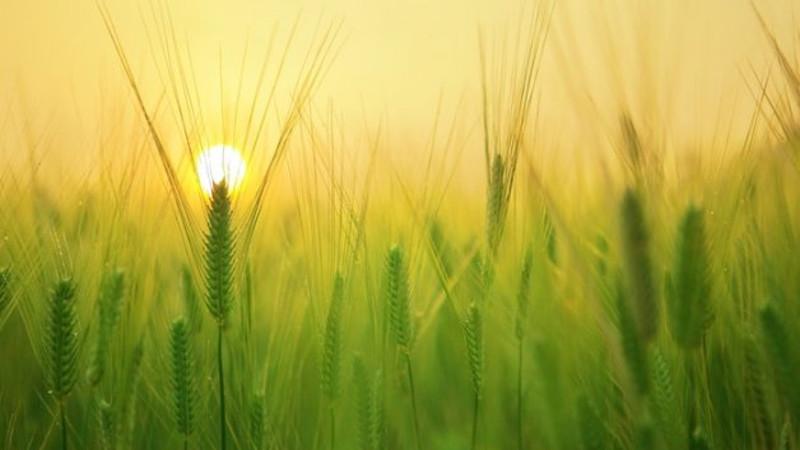 campo-cultivo