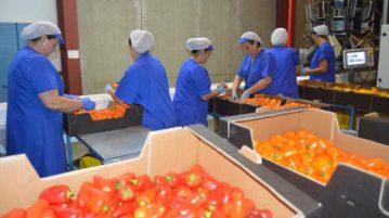trabajadoras-manipulado-frutas-hortalizas