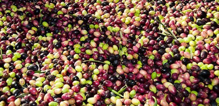 La PAC debe regular la cadena agroalimentaria para evitar crisis y abusos