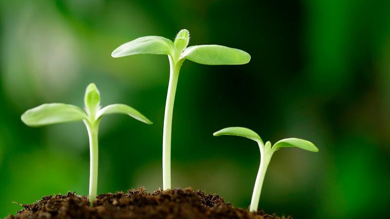 agricultura-sostenible-biodiversidad