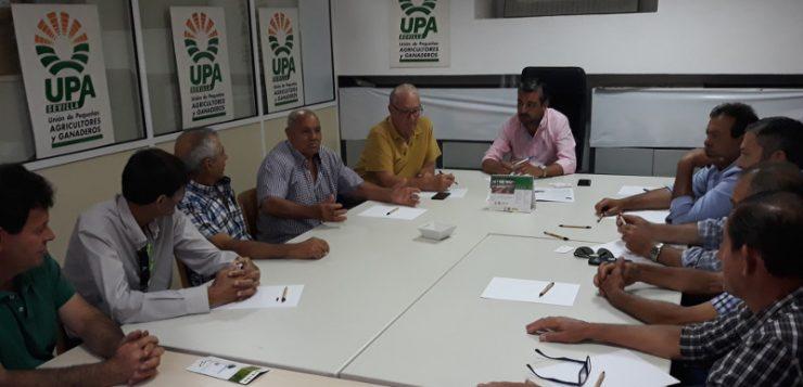 UPA Sevilla se reúne con el sector de la aceituna de mesa para analizar su problemática
