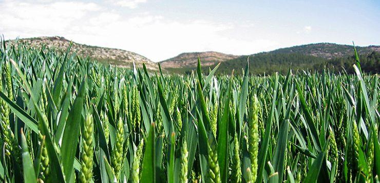 El próximo 17 de septiembre se presenta Agrohábitat, el Grupo Operativo Agricultura Sostenible y Biodiversidad