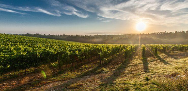 Una alternativa para sustituir a los sulfitos en la elaboración del vino tinto