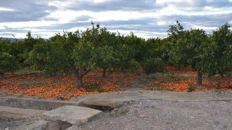 Huerto-naranjos-Burriana-Castellon