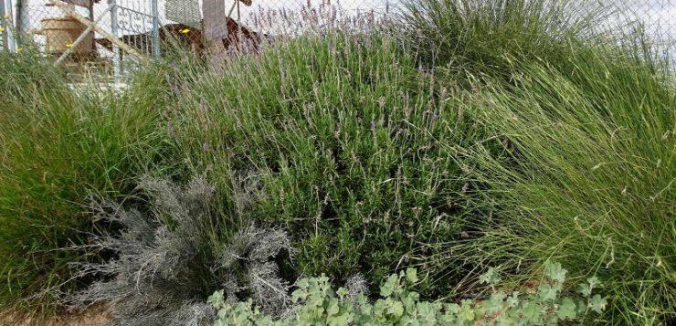 Un proyecto busca fomentar el uso de setos en la agricultura de la Región de Murcia