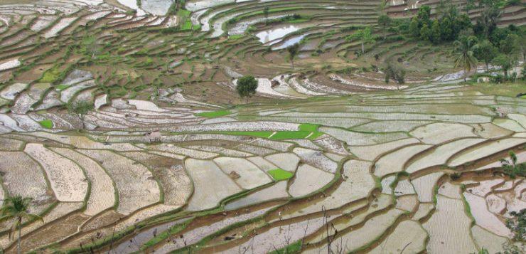 La agricultura intensiva es tan sostenible como la ecológica