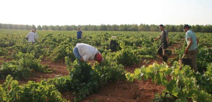 La agricultura baja el paro en septiembre en 5.196 personas, de ellos 3.087 en agricultura