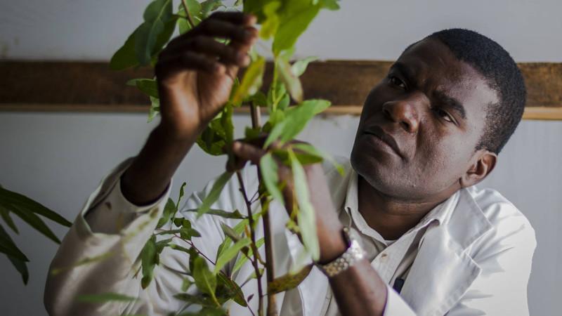 fisiologo-semillas-eucalipto