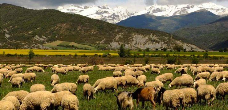WWF y SEO/BirdLife solicitan una PAC para la naturaleza