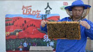 apicultor-chino-jianxing