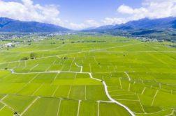 campo-arroz-taiwan