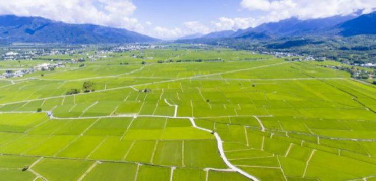 El arroz taiwanés combate el cambio climático con 'big data'