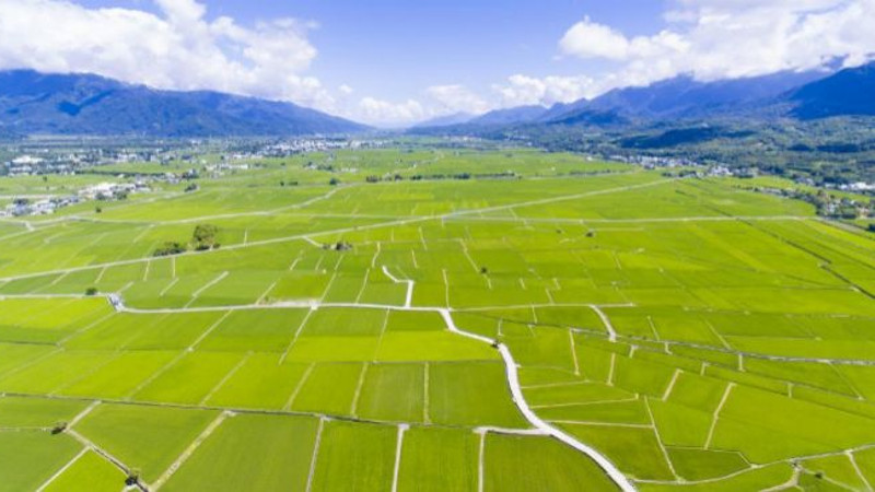 campo-arroz-taiwan