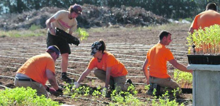 Agricultura para enfriar el planeta