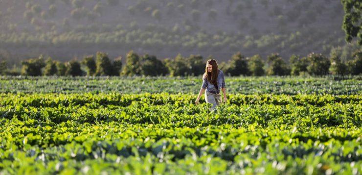 Inteligencia Artificial en la agricultura: el futuro ya está aquí