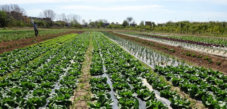 Un estudio del CSIC revela que los niveles contaminantes varían según la hortaliza