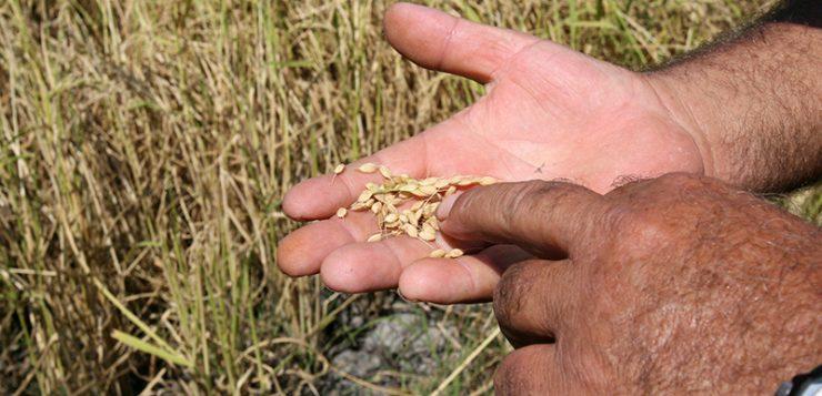 Valencia | Convocadas ayudas a la participación de agricultores en programas de calidad diferenciada