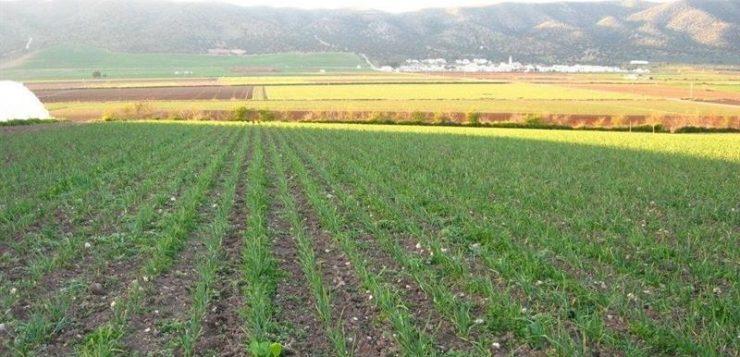 Iniciado nuevo pago de 43,9 millones de euros a la agricultura ecológica y agroambientales