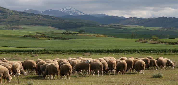 Proyecto Biodiversa: Agricultores y ganaderos, garantes de la biodiversidad