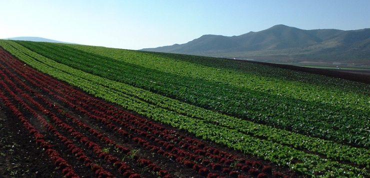 La agricultura ecológica da empleo a más de 42.000 personas en Andalucía