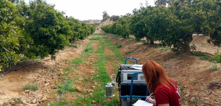 Investigadores de la UPCT reducen un 10% las emisiones de CO2 de almendros y cítricos con prácticas sostenibles