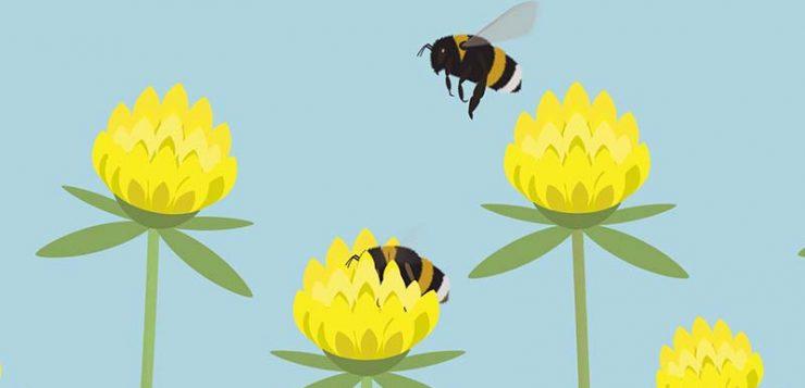 Implicaciones ecológicas de abejorros comerciales en espacios naturales