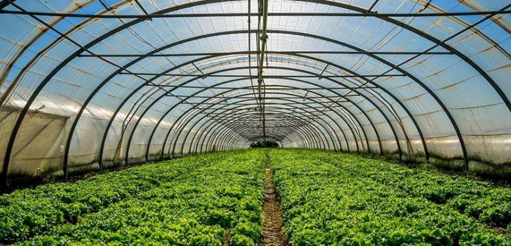 Agricultura amplía en 2,7 millones las ayudas para la mejora de invernaderos en Andalucía