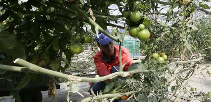 Otro problema para el campo: empresas que traen alimentos de Marruecos, cambian las etiquetas y los venden como españoles