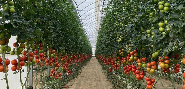 Los invernaderos de Almería y Granada, despensa de hortalizas de Europa