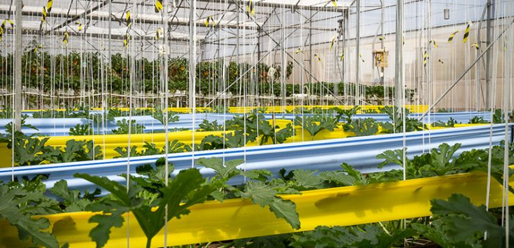 Agricultura invierte 10,92 millones de euros en la modernización de invernaderos andaluces