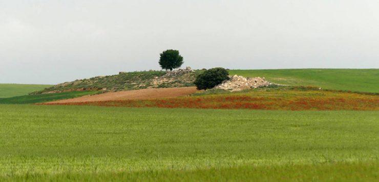 Más de 3.600 científicos proponen medidas para mejorar la Política Agraria Común de la UE