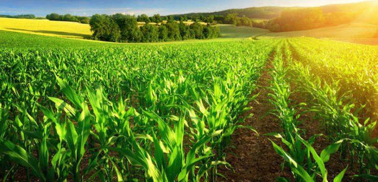 La agricultura ecológica se pone en primera posición de la carrera hacia el futuro